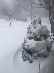 view from our front door January 27, 2015